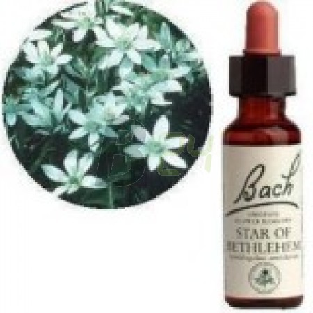 Bach virágeszencia ernyős madártej (10 ml) ML058831-110-1