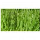 Bioverzum bio árpafű (200 g) ML058440-40-6