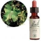 Bach virágeszencia szőlő (10 ml) ML058865-110-1