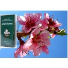 Golden sail szálas zöld tea barack virág (100 g) ML078931-14-5